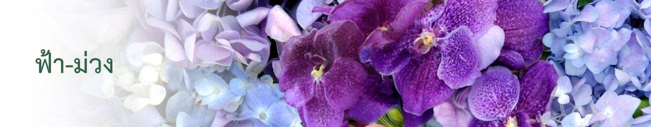 Blue - Violet (ฟ้า-ม่วง)