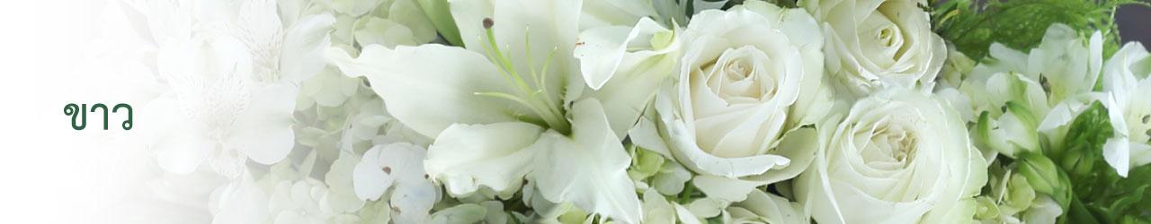 White (ขาว)